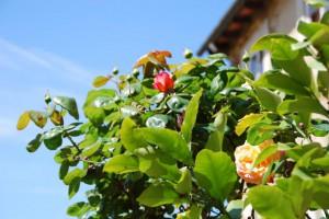 Frühlingserwachen Toskana