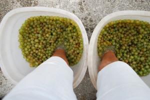 Weintrauben stampfen Toscana