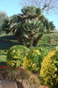 Bauernhaus mit Palme Toscana