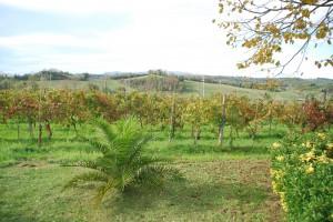 Immobilie Toskana mit Weinberg und Olivenhain