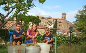 Weinernte unter dem Castello in Lari