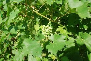Wein Toskana