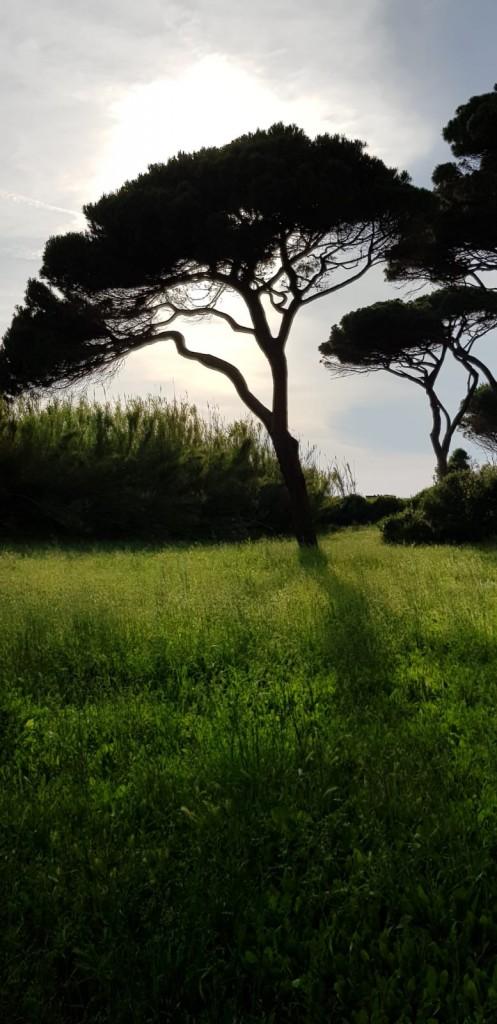 Fahrradtour durch den Pinienwald Golfo di Barrati